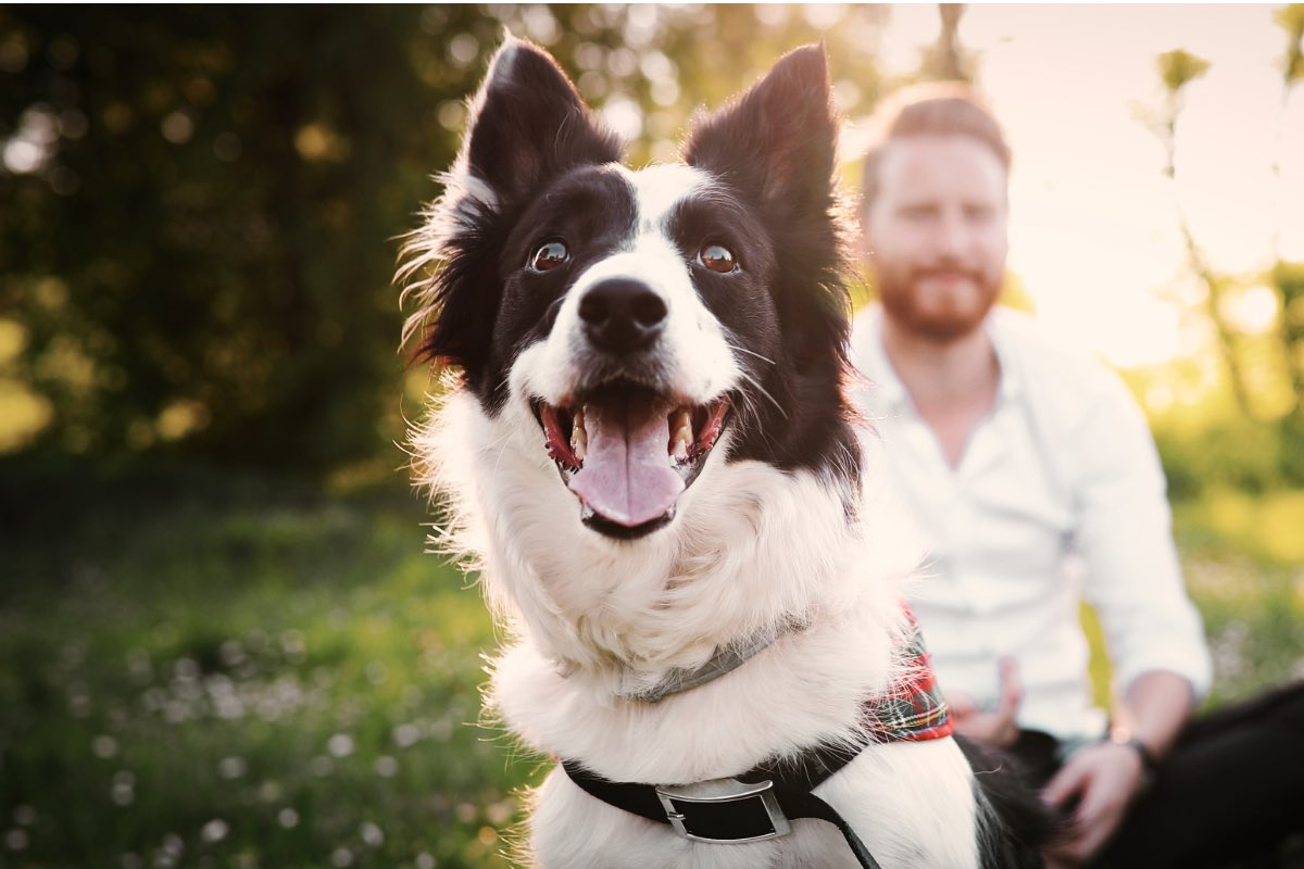 6 Tips to Keep Your Pet Happy in an Apartment | Caydon