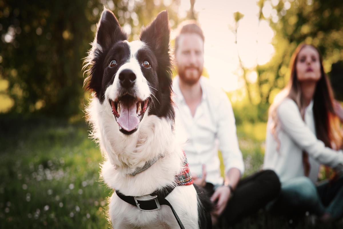 Happy dog outdoors with owners